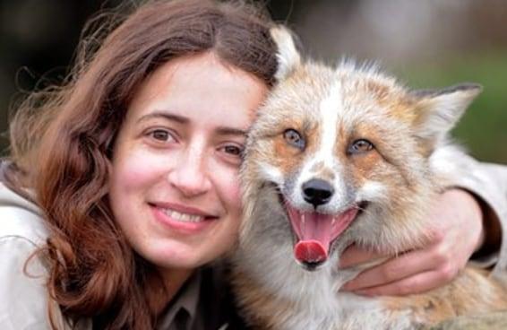 Esta raposa foi resgatada quando era filhote e agora pensa que é um cachorro