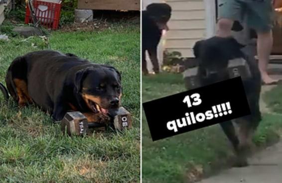 Este cachorro resolveu brincar com pesos de academia de 13 quilos