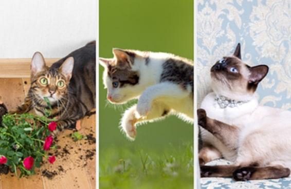 Existem seis tipos de gato no mundo - qual deles é você?