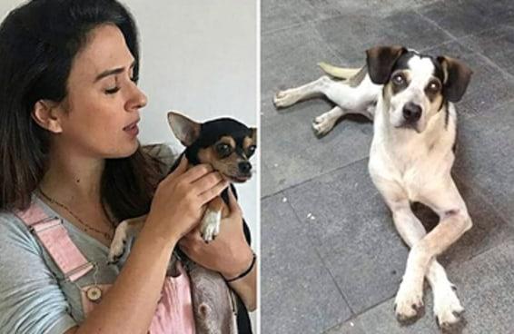 Celebridades reforçaram críticas ao Carrefour depois de um cachorro ser morto por um segurança