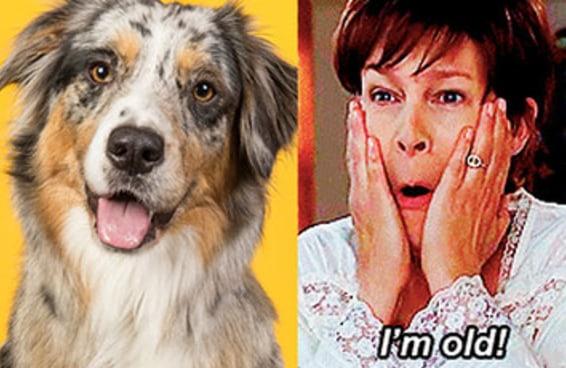 Qual é a sua idade em anos de cachorro?