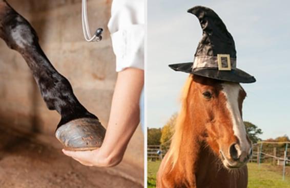 Este teste é sobre cavalos, e eu duvido que você consiga acertar mais de 6 perguntas