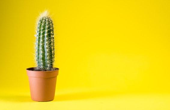 Decore uma sala e diremos que planta combina com você