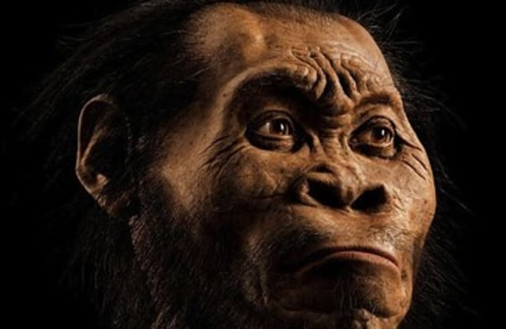 Entenda mais sobre a nova espécie humana que foi descoberta recentemente