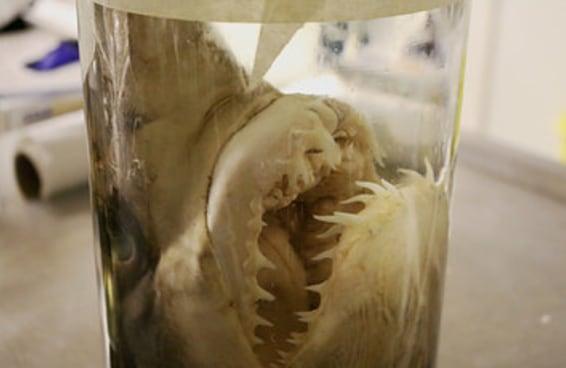 Por dentro da maravilhosamente assustadora sala do Museu de História Natural das Coisas em Frascos