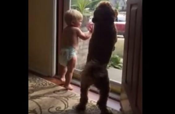 Um bebê e seu cachorro tiveram a mesma reação animada quando seu pai chegou em casa e tudo foi perfeito