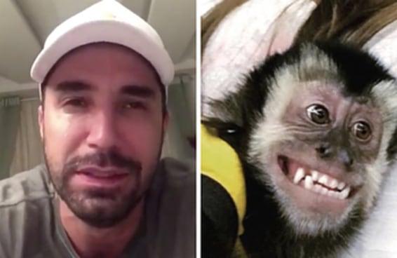 O sumiço e o retorno do macaco do Latino é puro suco de Brasil