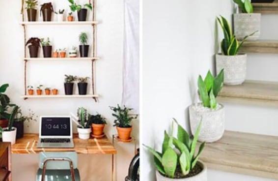 5 motivos para ter mais plantinhas em casa e no trabalho, segundo a ciência