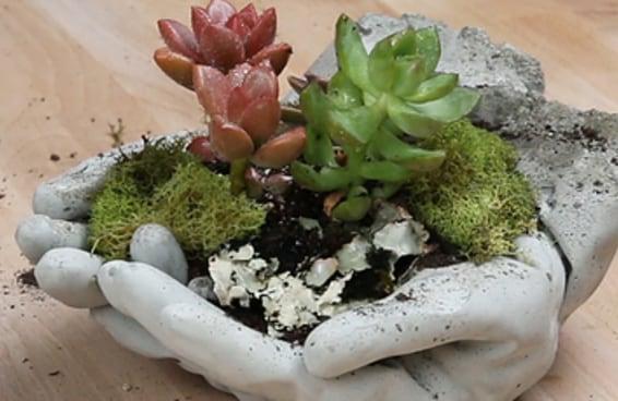Este minijardim será a adição perfeita para seu quintal