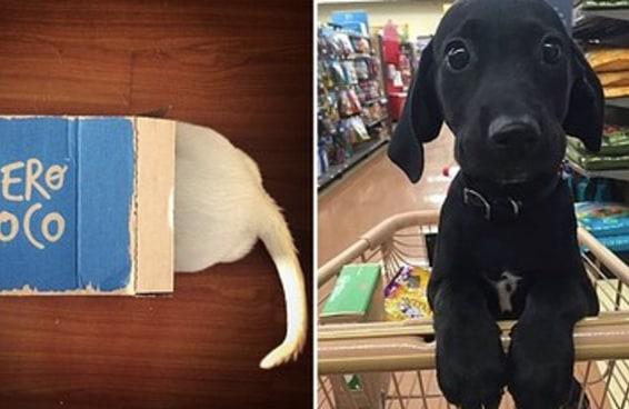 14 fatos sobre trabalhar em pet shop que nem todos contam