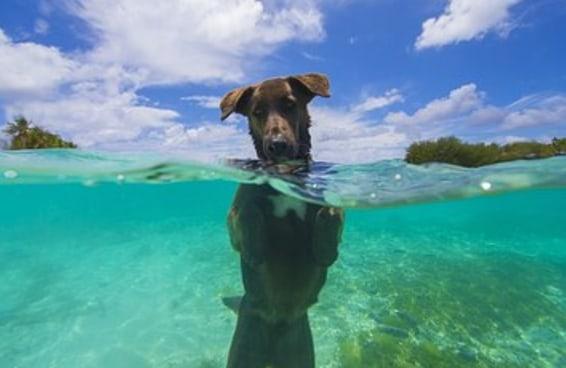 11 dicas fáceis para tirar as fotos mais fofas de seus animais de estimação