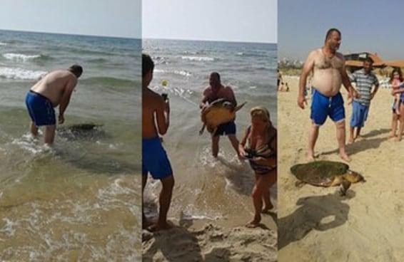 Pessoas tiraram esta tartaruga marinha do oceano para tirar fotos com ela