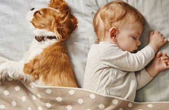 Uma lista de fotos fofas de 14 raças de cachorro super carinhosas