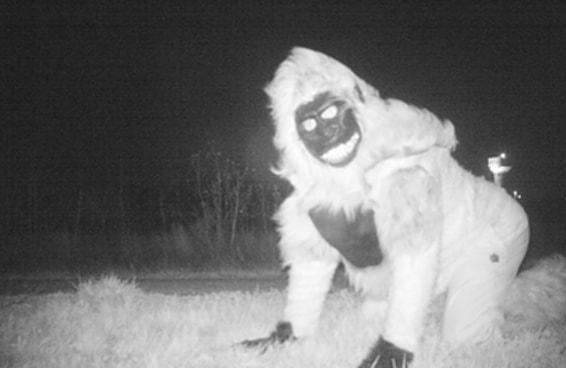 A polícia instalou uma câmera para encontrar um puma e de repente...
