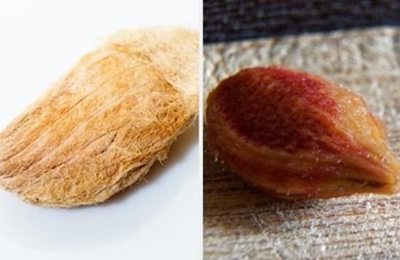 Você consegue reconhecer a fruta pelo caroço?