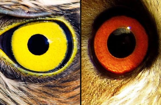 Só pessoas com olhos de águia conseguirão encontrar esses animais camuflados