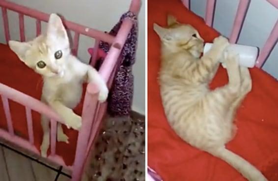 Esse gatinho é a coisa mais fofa que você vai ver hoje