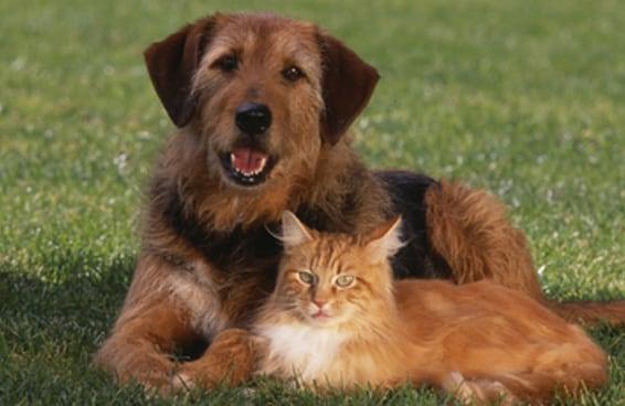 Este teste definitivo vai revelar se você gosta mais de gatos ou de cachorros