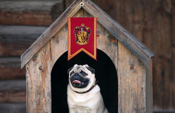 Seu cachorro pertence a qual casa de Hogwarts?