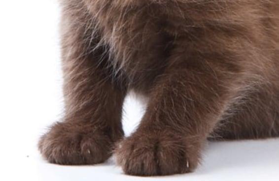 Isto é um cachorrinho ou um gatinho?