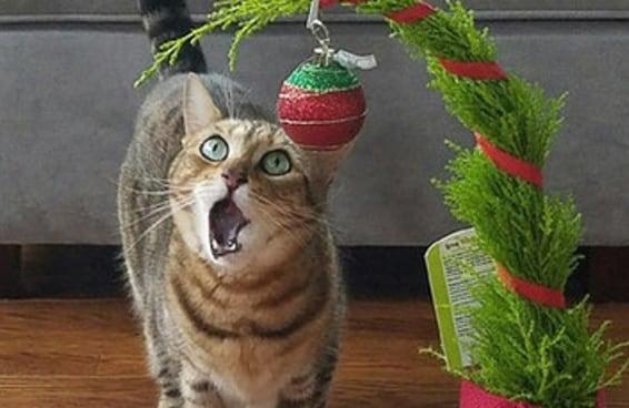 18 gatos muito, MUITO empolgados com suas árvores de Natal