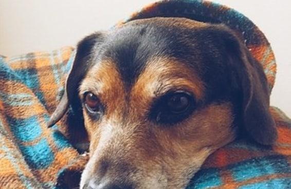 16 fotos de cachorros chamados Luke postadas nas redes sociais com a tag #LukedoDia
