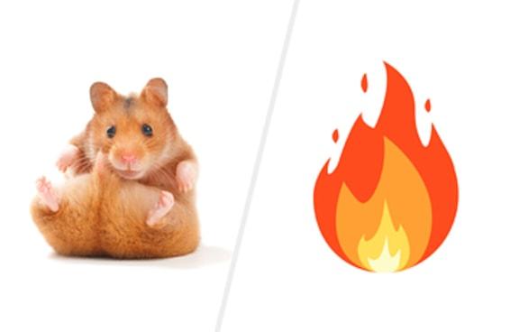 Que hamster você é?