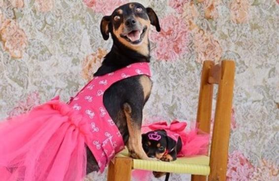 A cachorrinha que fez o ensaio grávida apresenta seus filhotes para a sociedade