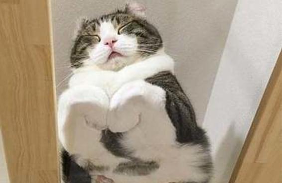 15 fotos de gatos em superfícies de vidro para quem precisa sorrir um pouco