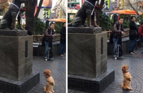 Este cãozinho posando em frente a uma estátua de outro cãozinho é a coisa mais fofa