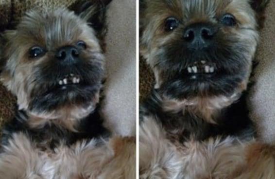16 cachorros da vovó levando suas vidinhas abençoadas