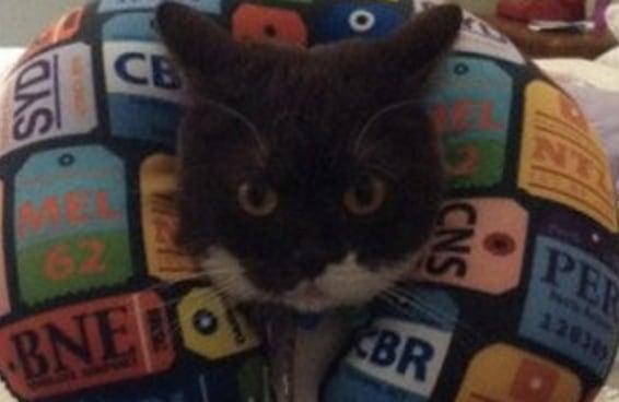 16 gatos tão confusos quanto você