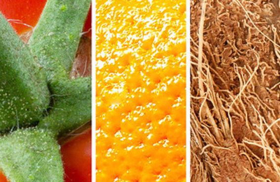Você consegue identificar frutas e legumes mesmo bem de pertinho?