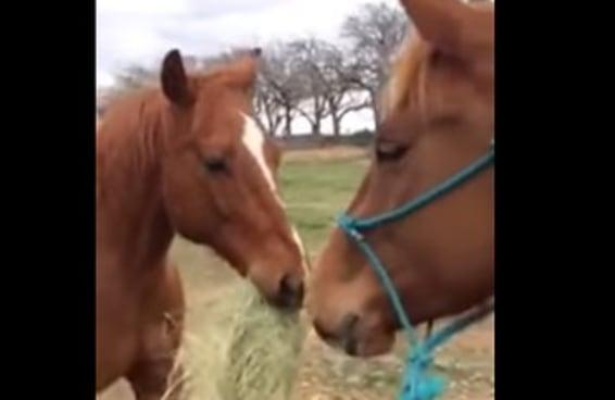 Este cavalo levando feno para a namorada para que os dois possam comer juntos vai derreter seu coração
