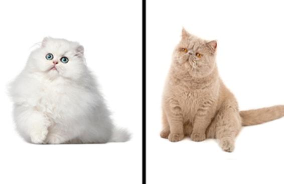 Você consegue adivinhar qual é o rabinho destes gatinhos?