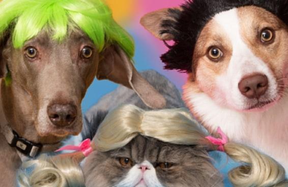 Literalmente apenas 20 animais de estimação usando perucas