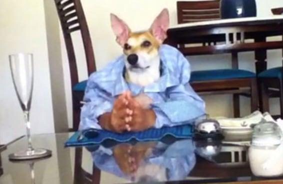 Esse cachorro falhou de forma espetacular ao tentar ser humano
