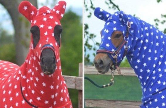Qual cavalo de roupinha é você?