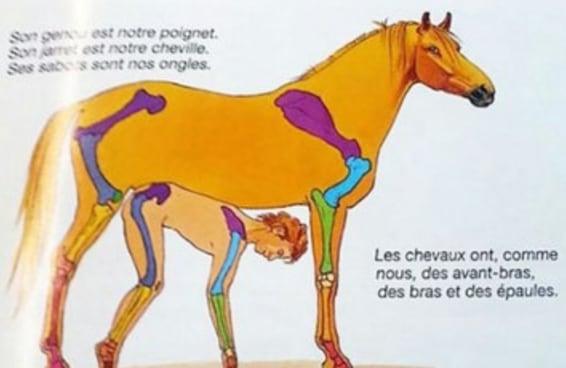 Podemos falar sobre essa imagem esquisita de um cavalo que as pessoas estão compartilhando?