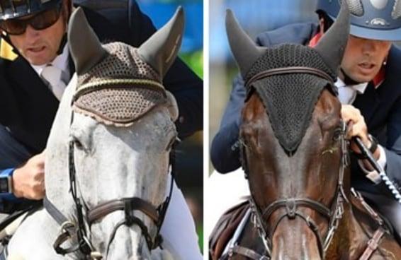 Caso você não tenha reparado, os cavalos do hipismo usam chapeuzinhos