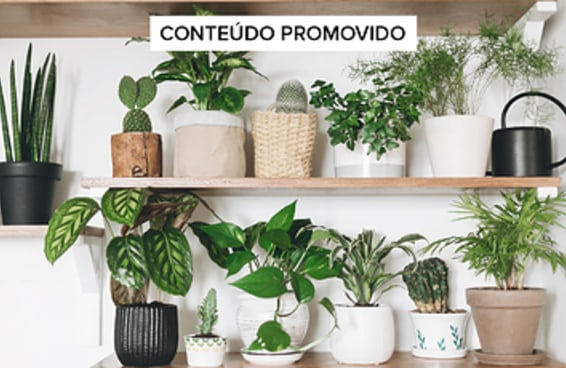 12 produtos para virar uma doida das plantas de respeito