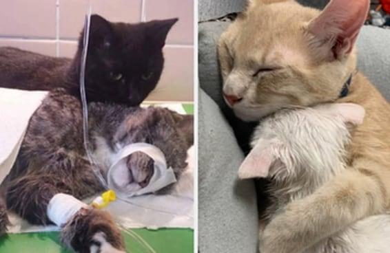 18 vezes em que os gatos provaram que, na realidade, são legais