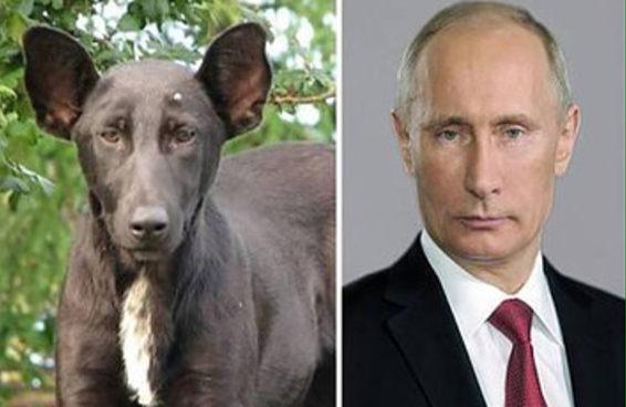 A internet está se divertindo com estas versões caninas de celebridades