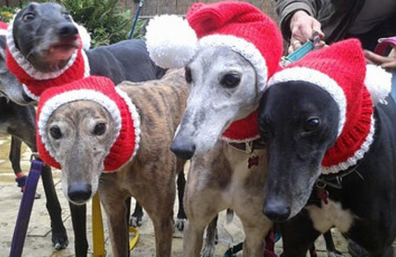 Uma mulher tricotou mais de 300 casacos de Natal para cachorros abandonados
