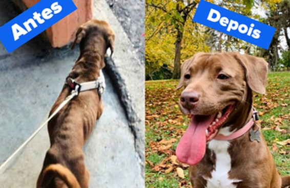 """28 fotos de """"antes e depois"""" que mostram como a adoção de animais é poderosa"""