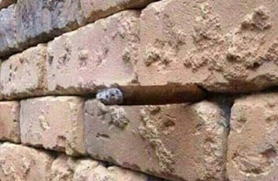 Você consegue ver o que há escondido nesta imagem?