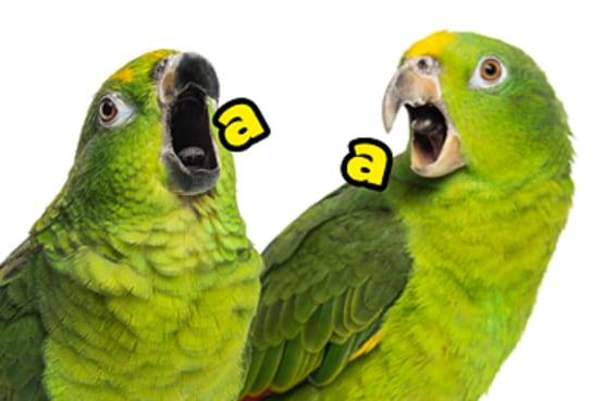 17 papagaios que vão te fazer dar umas boas risadas