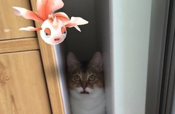 Estaria este gato realmente vendo um Pokémon?