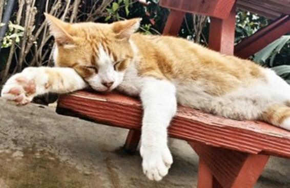 23 gatos que não são ninguém sem a sua xícara de café