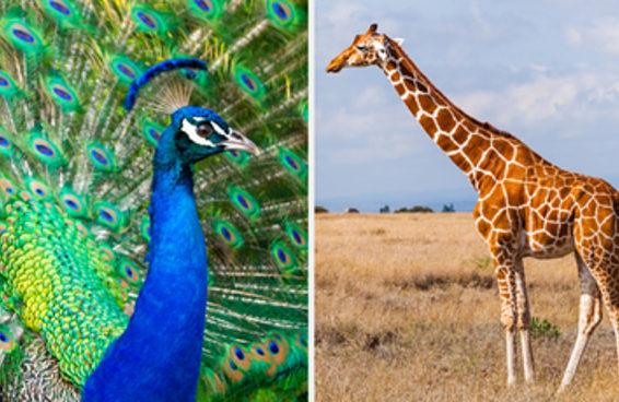 Só quem é muito selvagem vai mandar bem neste teste sobre animais
